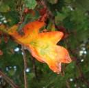 actividad-semin-otoño14